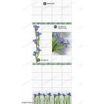 Панель пвх глянцевая «Век», фотопечать, ирис (вставка #2, левая + правая)
